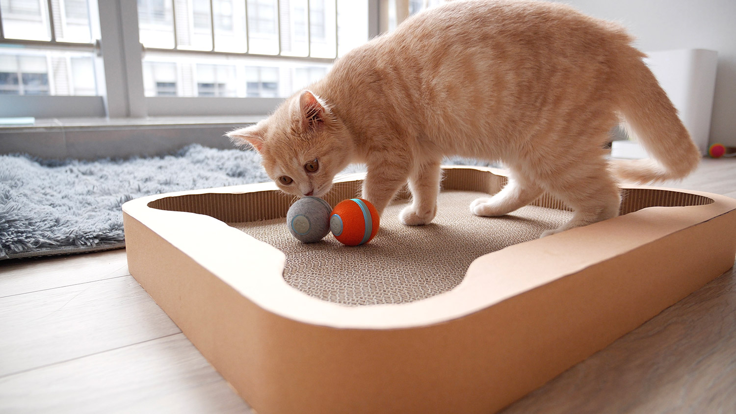Cheerble Cat Board Game - Interactive Cat Board Game Has a Robotic Ball That Will Keep Them Busy For Hours