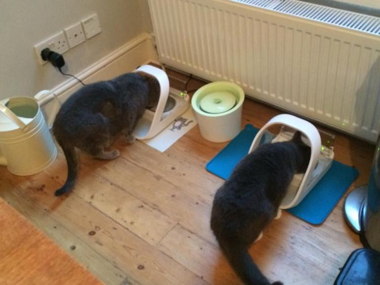 Microchip Food Bowl For  Cats