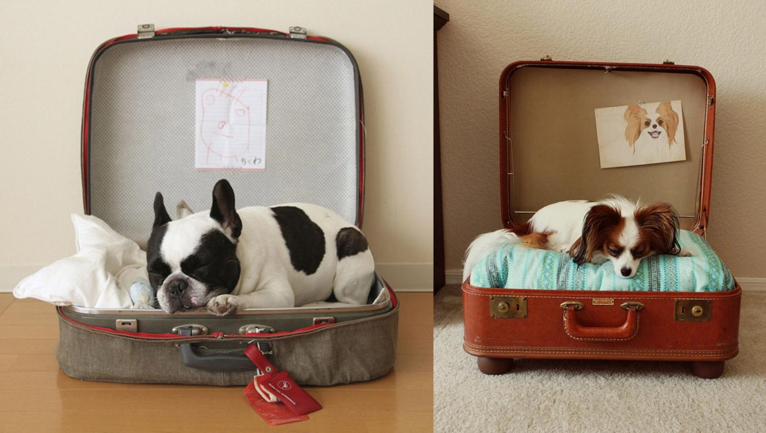 Vintage suitcase dog bed - DIY luggage dog bed