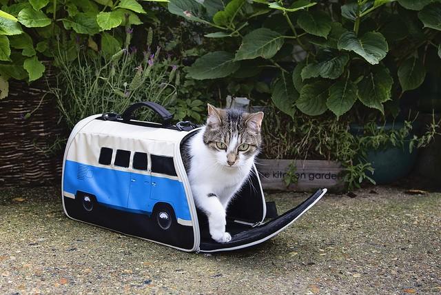 volkswagen van pet carrier