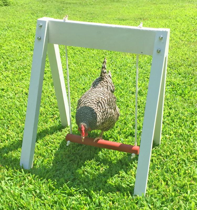 Chicken Swing Set