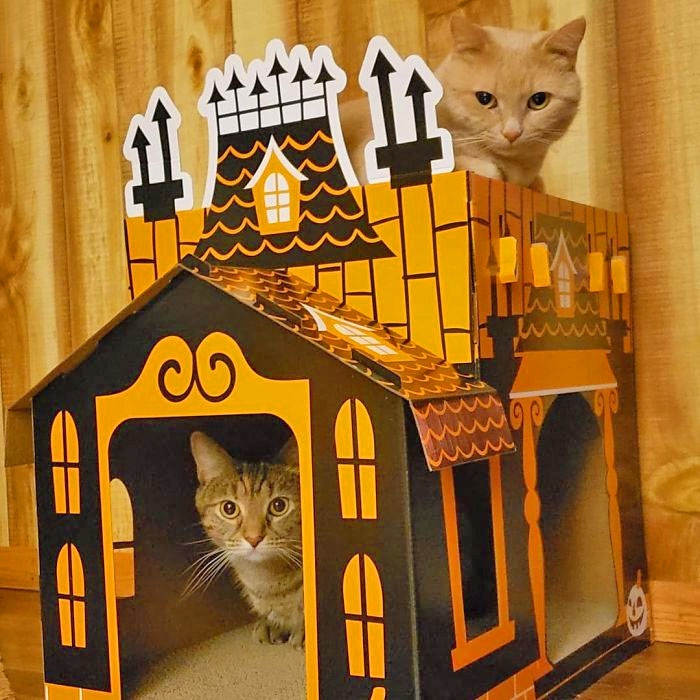 Halloween Cat Mansion