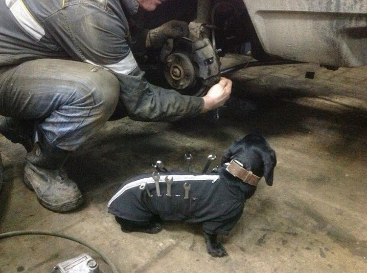 Tool-dog helps holds tools for mechanic - Russian mechanics dog tool box - Wiener dog holds wrenches