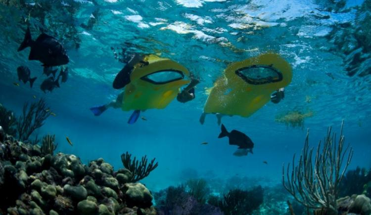 Reefboard - Underwater Window flotation device - see underwater without submerging your head in water - dry snorkel float window