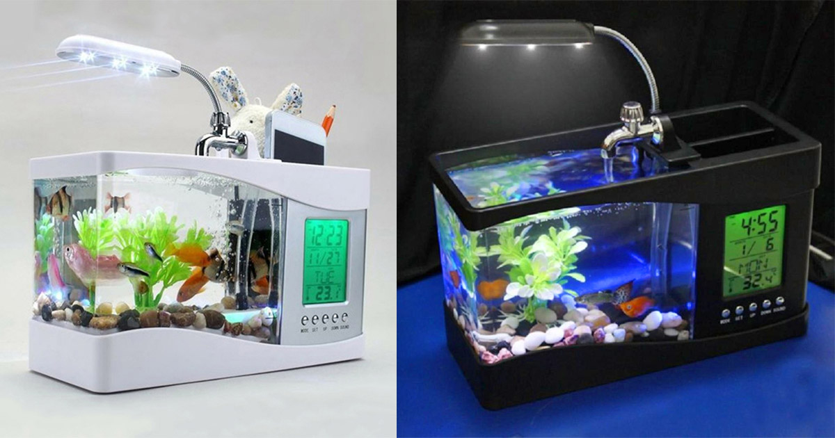 This USB Powered Mini Aquarium Lets You Keep Fish Right On Your Desk At Work