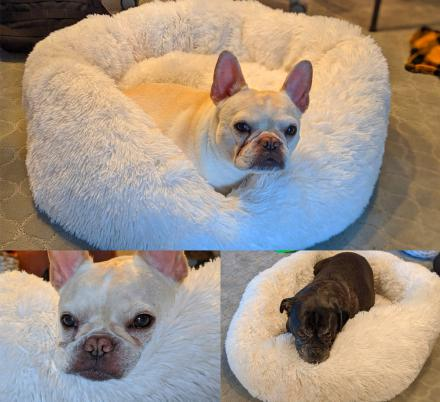 We Found The Fluffiest, Softest Dog Bed In The World