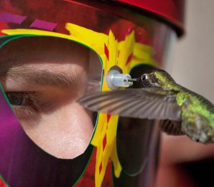 Wearable Hummingbird Feeding Mask