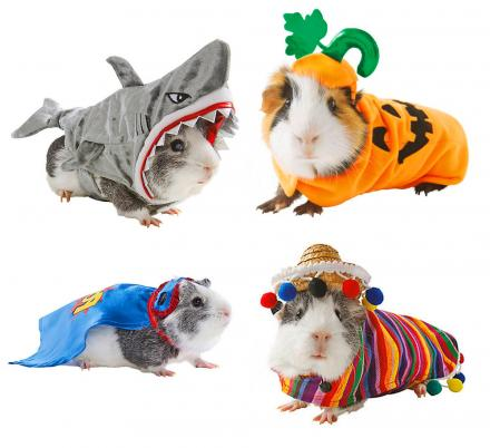 You Can Now Get Costumes For Your Hamsters For Halloween
