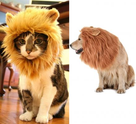 You Can Now Turn Your Dog Or Cat Into a Lion With These Lion Mane Pet Wigs