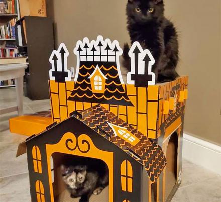 Your Cats Can Now Have Their Very Own Haunted Mansion